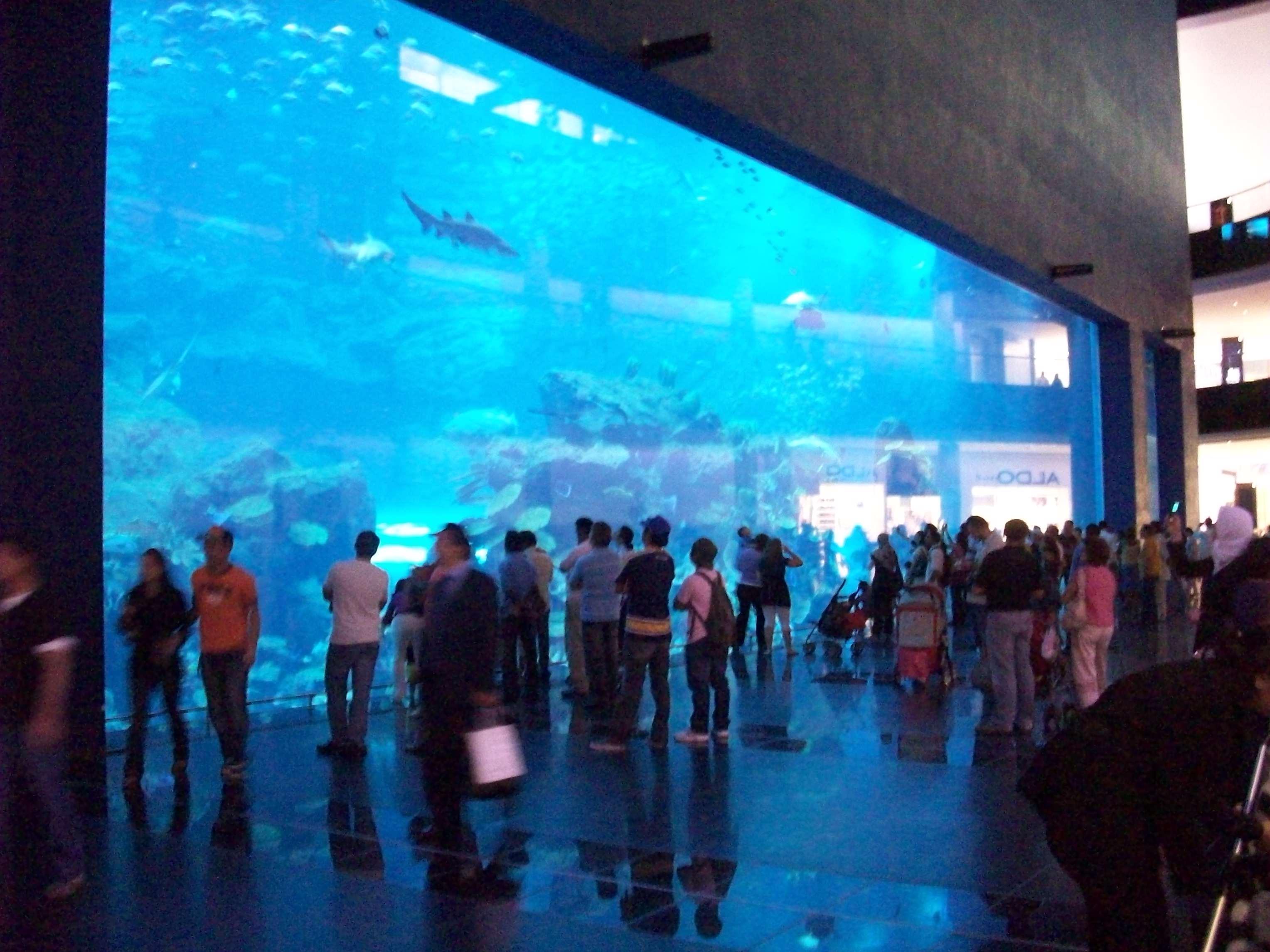 Fish Aquarium In Coimbatore - Dubai aquarium 100_19791